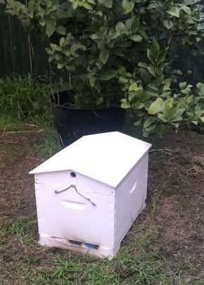 Nucleus Hive for Mid October 2020